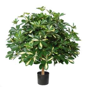 Schefflera Plant w pot 80 cm green Yellow